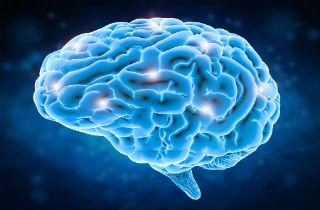 Brain circuits and drug use