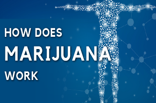 How does marijuana work?