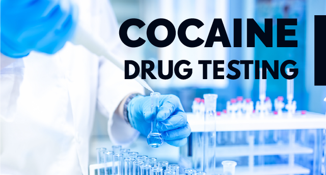 How long does cocaine stay in blood, hair, or urine?