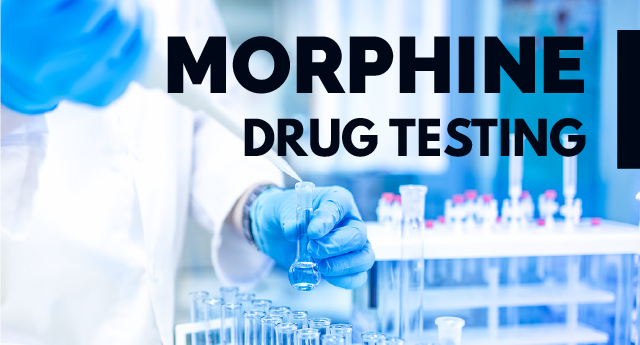 How long does morphine stay in the blood, urine, hair, or sweat?