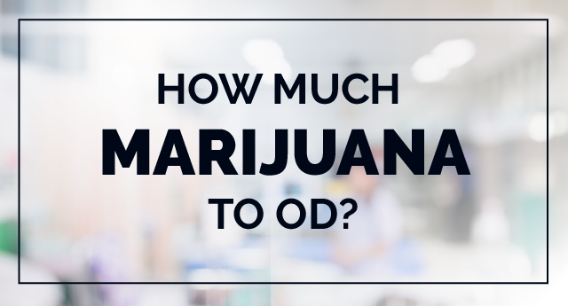 Marijuana overdose: How much amount of weed to OD?