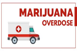 Can you overdose on marijuana?