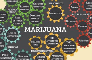 Effects of marijuana on the brain (INFOGRAPHIC)