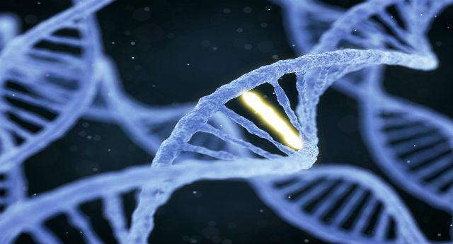 How do genes affect addiction?