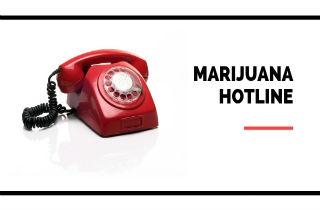 Marijuana Hotline