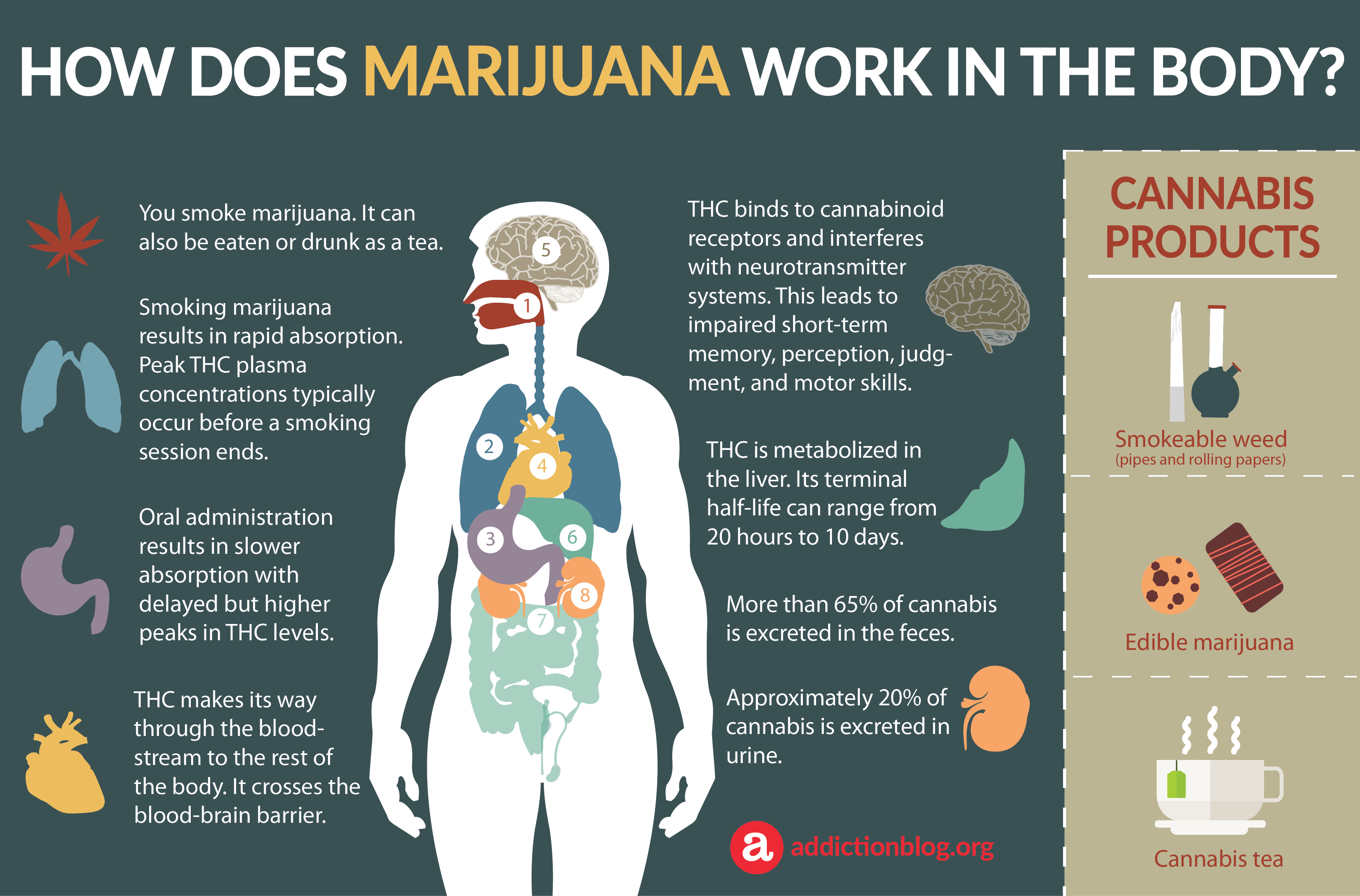 Marijuana Metabolism in the Body: How Marijuana Affects the Brain (INFOGRAPHIC)
