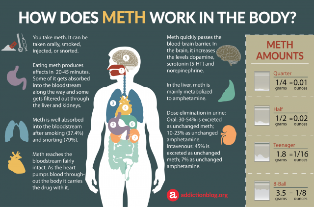 Meth Metabolism in the Body: How Meth Affects the Brain (INFOGRAPHIC)