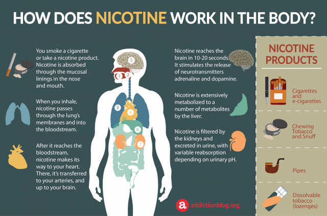 Nicotine Metabolism in the Body: How Nicotine Affects the Brain (INFOGRAPHIC)