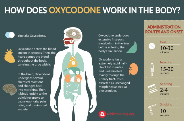 How Does Oxycodone Work In The Body (Infographic)