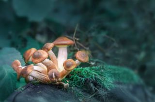 What Can Happen If You Collect and Consume the Wrong Type of Mushrooms?