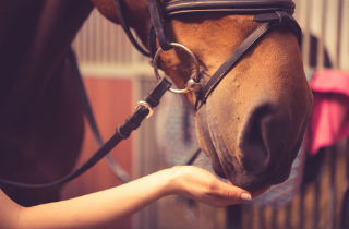 Horse Riding as Therapy in Addiction Treatment