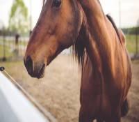 How Horse Riding Helps Addiction Treatment & Recovery